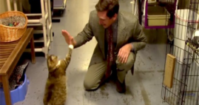 Greatest Animal Shelter Commercial Of All Time! cats vs cancer