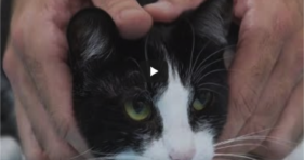 How To Pick Up A Cat Like A Pro cats vs cancer