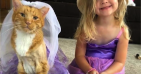 Bailey Loves His Little Sisters adorable cats vs cancer