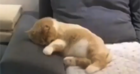 Kitty Dreaming Is The Cutest Thing You'll See cats vs cancer