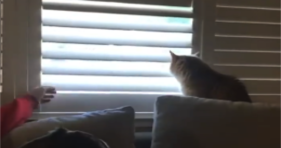 This Kitty Loves To Be A Birdwatcher cats vs cancer