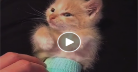 Teeny Kitten In A Diaper Will Melt Your Heart cats vs cancer