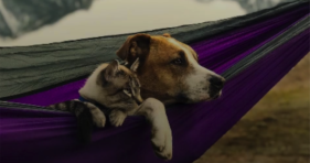 Henry The Dog Comforts His Cat Broski cats vs cancer
