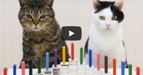 Smarty Cats Take on Dominoes! cute cats vs cancer