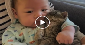 Beware Of Heart Melting Content Ahead! baby cats vs cancer