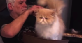Cat Dad Grooming Is The Best! fluffy cats vs cancer