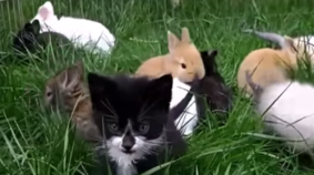 Kittens vs Rabbits: Who's The Cutest of Them All?