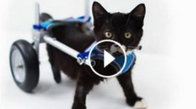 Don't Miss The Story Of TinyKittens Rescuing Cassidy
