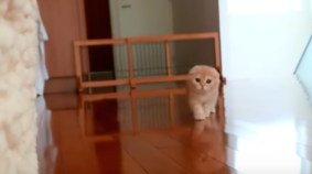 Most Adorable Stealth Kitten Of All Time?