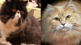 March Meowdness Sweet 16: Walter Bishop vs Charlie