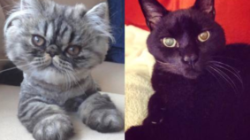 March Meowdness Sweet 16: Mumu vs Maggie May