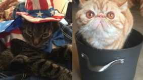 March Meowdness Sweet 16: Cheens vs Mick