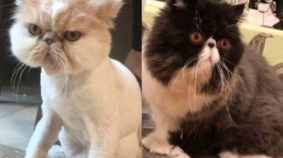 March Meowdness Elite Eight: Seymour vs Walter Bishop