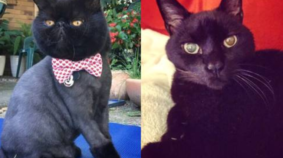 March Meowdness Elite Eight: Merlin vs Maggie May