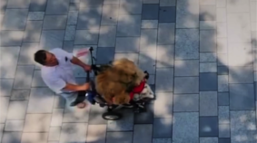 It's a Bird, It's a Plane, It's a Stroller Full of Cats!