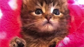 If You're Having Cuteness Withdrawal, Watch This!