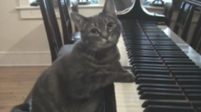 Nora The Piano Playing Cat