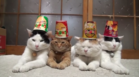 Cup of Noodles Cats