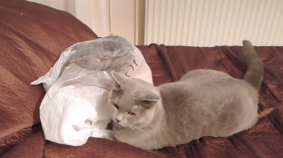 9 Lives: Plastic Bag Surprise