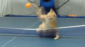 Ping Pong Cat Asserts His Dominance