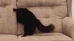 Cat Magician Disappears Into Couch