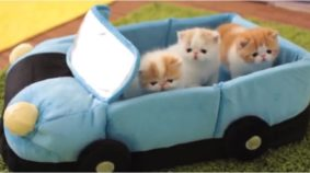 Kittens Steal Car And Go For Joy Ride