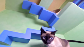 Hero Turns Home Into Ultimate Cat Playland