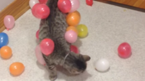 Kitty Discovers The Power of Static Balloons