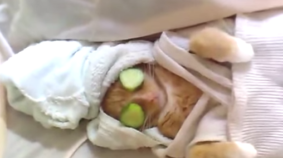 Spa Cat Enjoying A Cucumber Face Mask