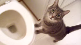 Cat Loves Watching Toilet Flush