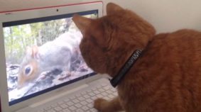 Cat Baffled By Squirrel Video