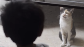 Just A Perfectly Normal Cat and Baby Conversation
