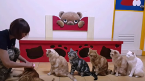 Teaching Cats How To Wait in Line
