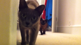 Stealth Cats + Rocking Guitar = Sweet Video!