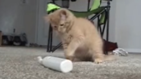 Kitten Baffled By Electric Toothbrush