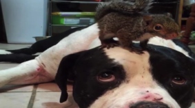 Dog and Squirrel BFFs Don't Want Cat Around