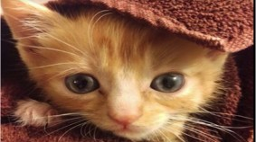 Get Ready For This Kitten To Melt Your Heart