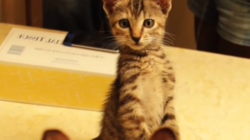 Kittens Seeing Themselves In Mirrors For The First Time