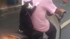 Fearless Cat Rides Motorcycle