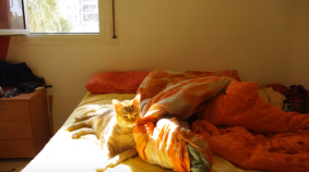 Cat Takes Forever to Get Out of Bed in the Morning