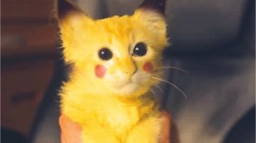 Celebrate Caturday With Pokemon Go Cats And More!